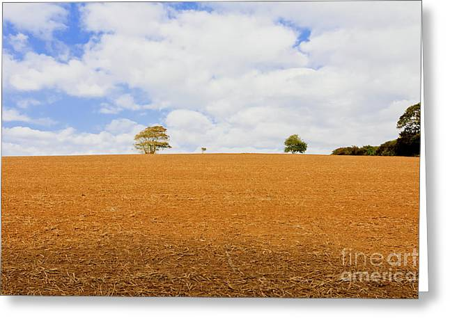 Not A Lone Tree Greeting Card by Terri Waters