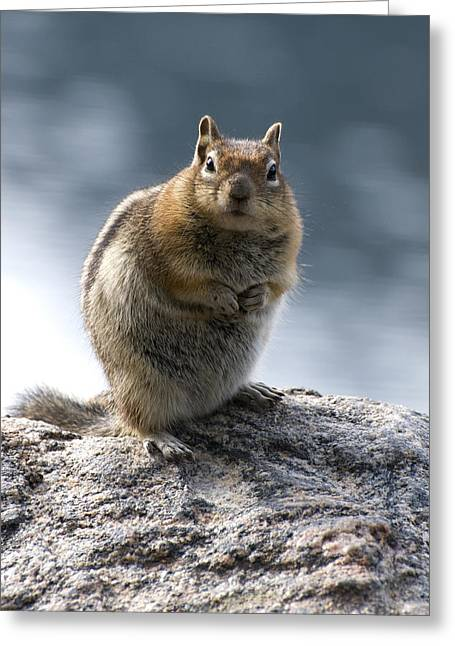 Chipmunk Greeting Cards - Not Alvin Greeting Card by Richard Henne