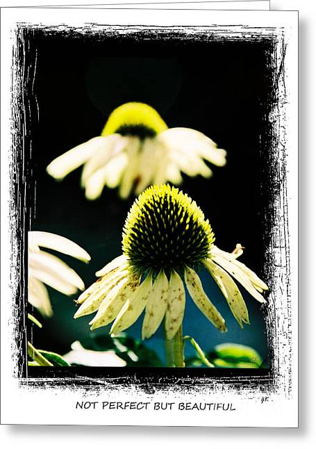 Plant Stretched Canvas Greeting Cards - Not Perfect But Beautiful Greeting Card by Gerlinde Keating - Keating Associates Inc
