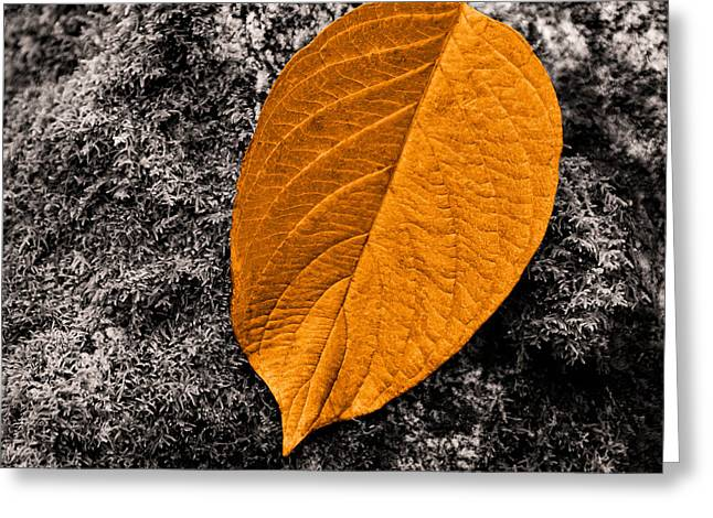 November Leaf Greeting Card by Ari Salmela