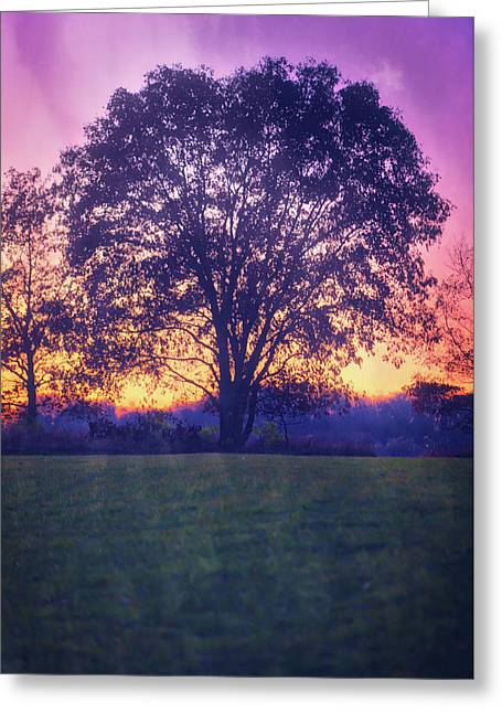 November Sunset And Lone Tree At Retzer Nature Center Greeting Card by Jennifer Rondinelli Reilly - Fine Art Photography