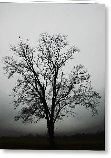 November Tree In Fog Greeting Card by Patricia Motley