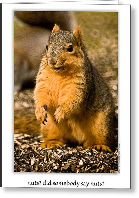 Best Sellers -  - Sciurus Carolinensis Greeting Cards - Nuts? Did Somebody Say Nuts? Greeting Card by  Onyonet  Photo Studios