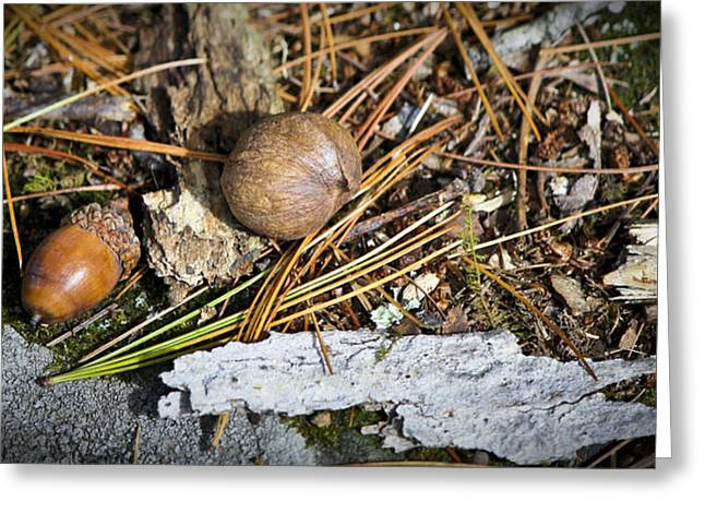 Pine Needles Greeting Cards - Nuts Greeting Card by Teresa Mucha