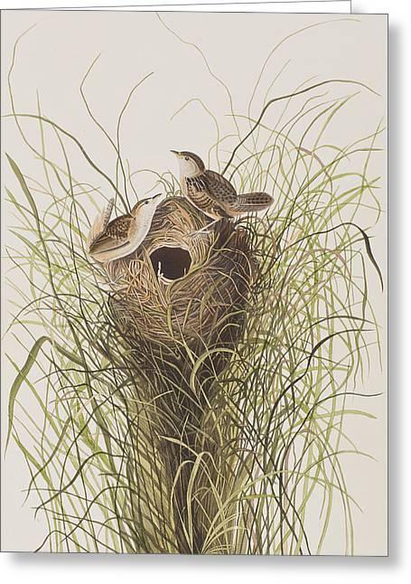 Wrens Greeting Cards - Nuttalls lesser-marsh Wren  Greeting Card by John James Audubon