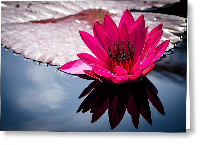 Aquatic Greeting Cards - Nymphaea - Catherine Marie Greeting Card by Anik Sales