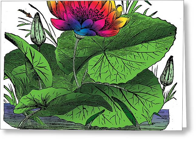 Outmoded Mixed Media Greeting Cards - Nymphaea Greeting Card by Eric Edelman