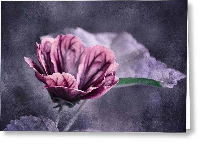 Flower Design Greeting Cards - o Flora with texture o Greeting Card by SK Pfphotography