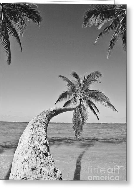 Overhang Greeting Cards - Oahu Palms Greeting Card by Tomas del Amo - Printscapes