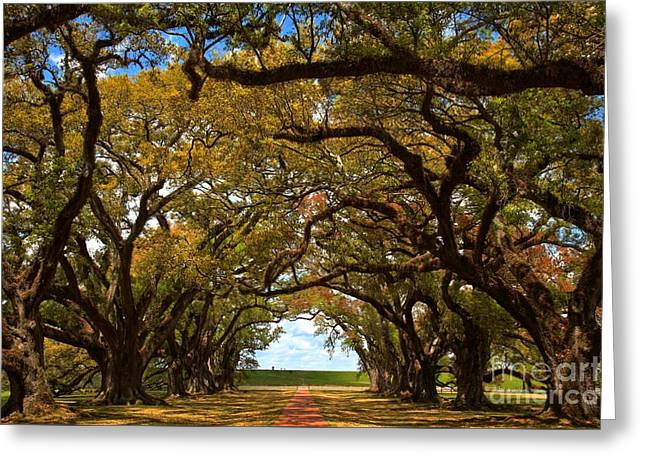 Slavery Greeting Cards - Oak Alley Avenue Of The Oaks Greeting Card by Adam Jewell