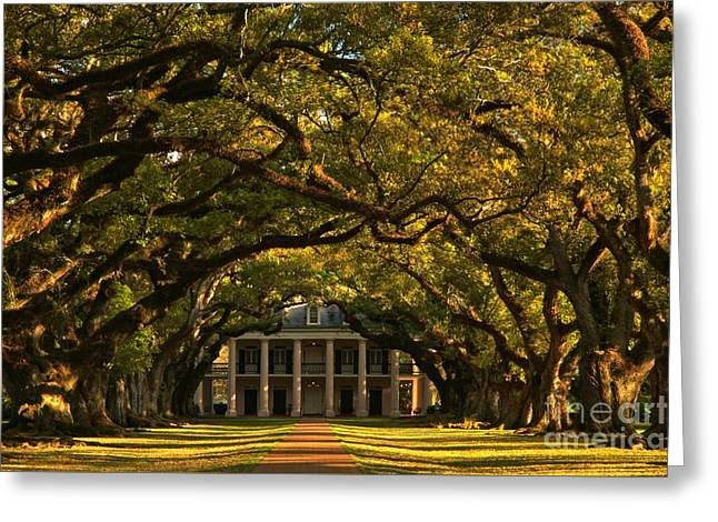 Slavery Greeting Cards - Oak Alley Entrance Greeting Card by Adam Jewell