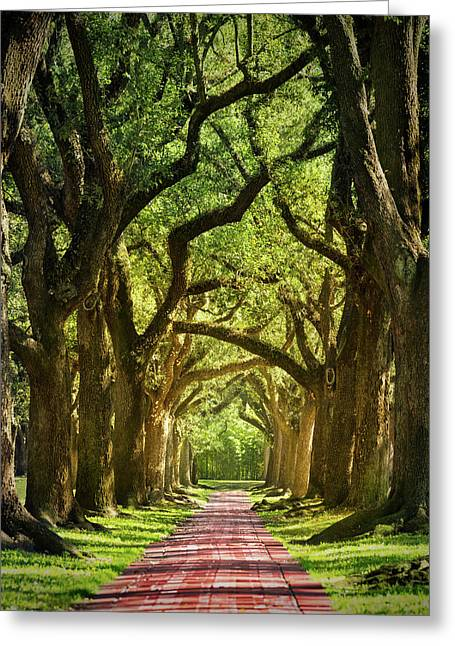 Oak Alley Greeting Card by Mikes Nature