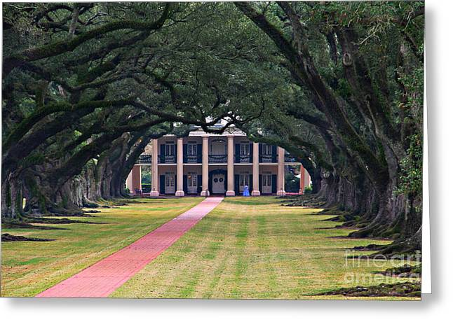 Oak Alley Greeting Cards - Oak Alley Greeting Card by Perry Webster