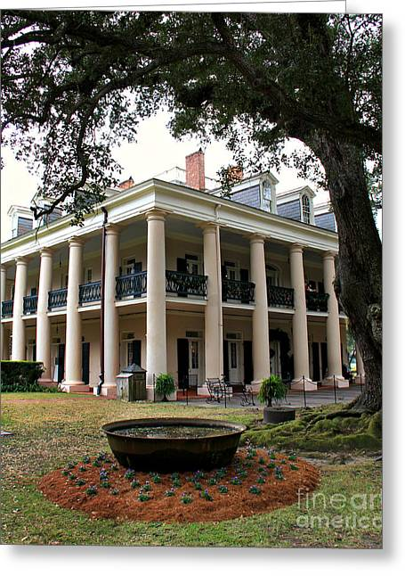 Mississippi Photographs Greeting Cards - Oak Alley Plantation Greeting Card by Perry Webster