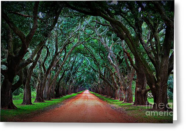 Oak Alley Greeting Cards - Oak Alley Road Greeting Card by Perry Webster