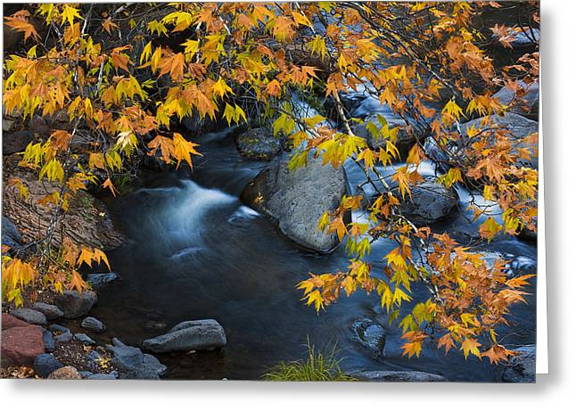 Oak Creek Canyon At Slide Rock In The Fall Greeting Card by Dave Dilli