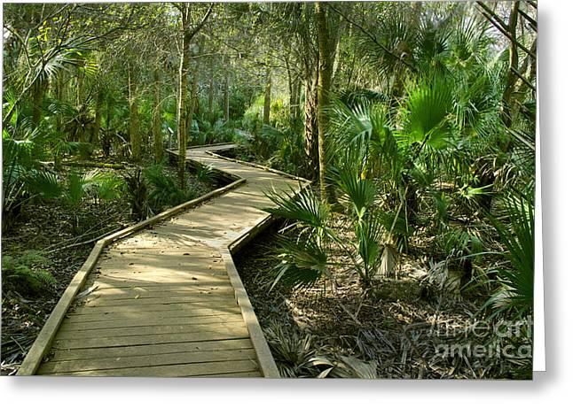Oak Hammocks Greeting Cards - Oak Hammock Trail in Florida Greeting Card by Kenneth Murray