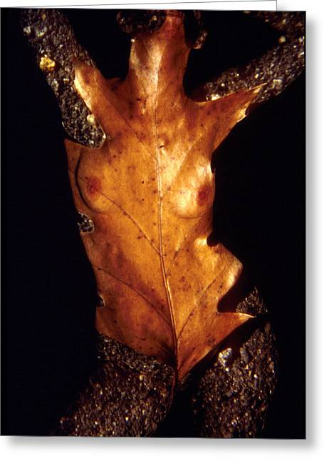 Figure Based Greeting Cards - Oak Leaf Greeting Card by Arla Patch