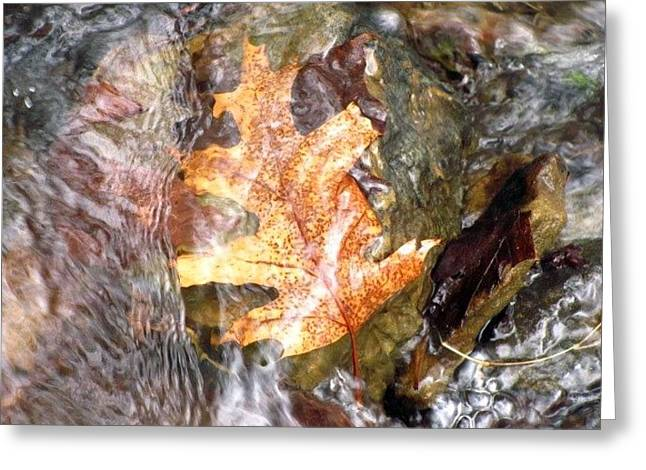 Oak Creek Greeting Cards - Oak Leaf in Moving Water Greeting Card by Kit Labossiere