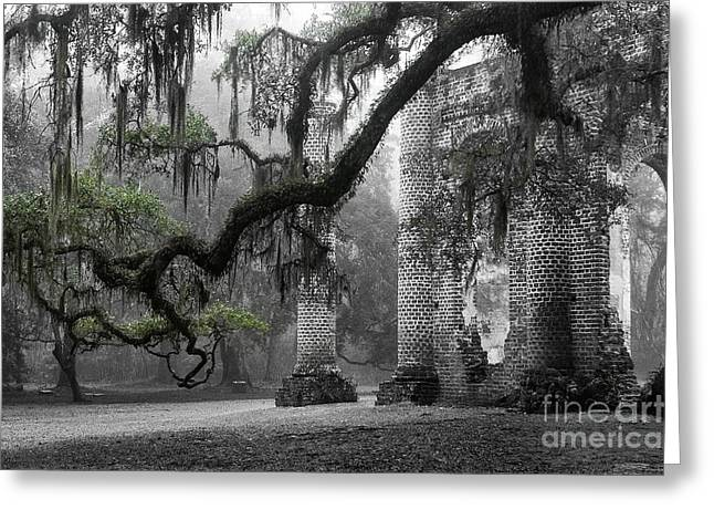 Old Greeting Cards - Oak Limb at Old Sheldon Church Greeting Card by Scott Hansen