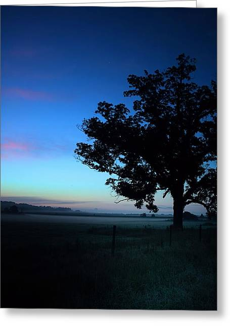 Mccoy Photographs Greeting Cards - Oak Silhouette Greeting Card by A Different Brian Photography