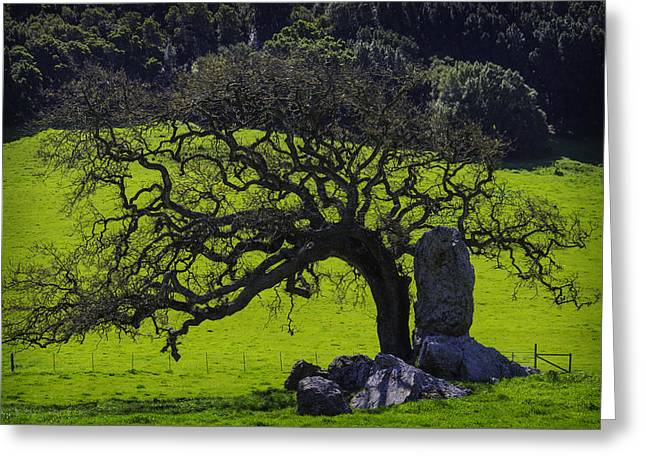 Oak Tree And Rock Greeting Card by Garry Gay