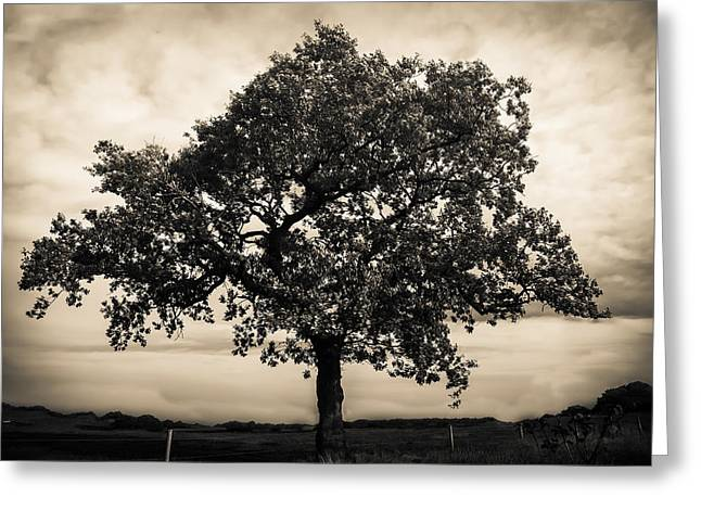 Field. Cloud Greeting Cards - Oak Tree Greeting Card by Duncan Richardson