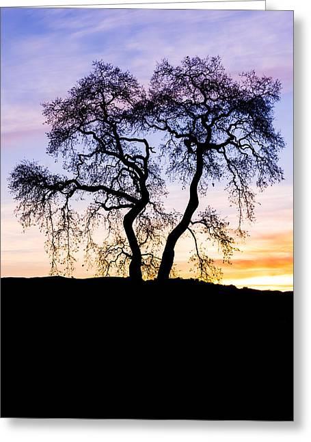 Gilroy Greeting Cards - Oak Tree Silhouette At Dawn Greeting Card by Priya Ghose