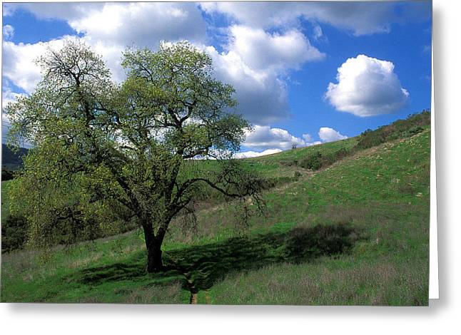 Featured Art Greeting Cards - Oak Tree with Clouds Greeting Card by Kathy Yates