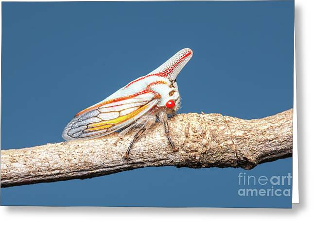 Oak Treehopper I Greeting Card by Clarence Holmes