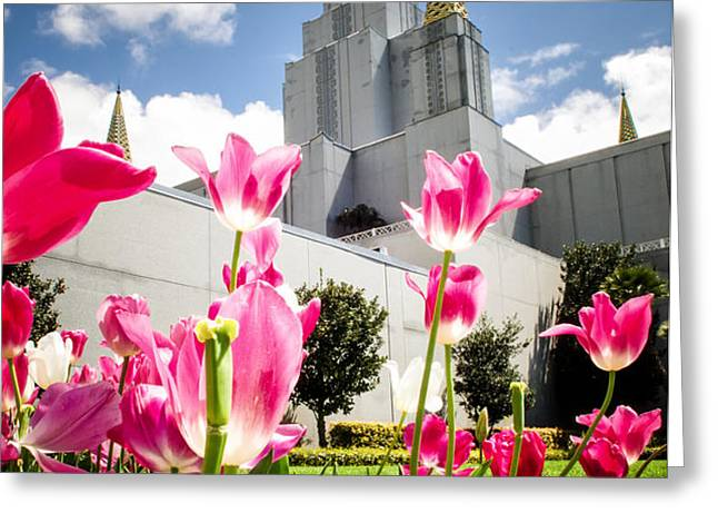 Oakland Pink Tulips Greeting Card by La Rae  Roberts