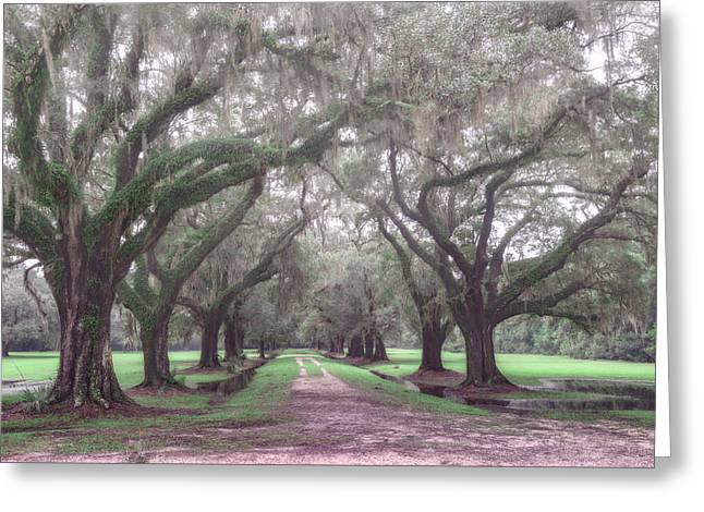 Oaks In Laurel Hill Park, Mount Pleasant, Sc Greeting Card by Rick Berk