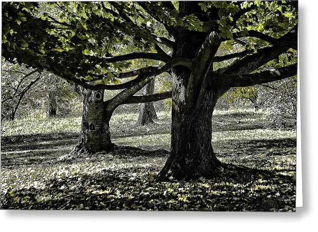 Subtle Colors Greeting Cards - Oaks Of Monticello Greeting Card by Robert Meyerson