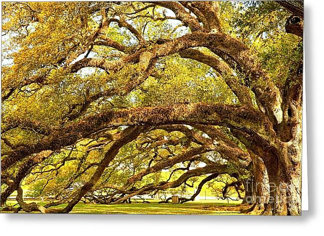Slavery Greeting Cards - Oak Alley Tunnel of Oaks Greeting Card by Adam Jewell