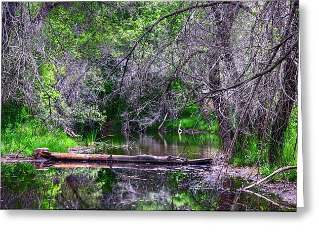 Prescott Greeting Cards - Oasis of the Lake. Greeting Card by Thomas  Todd