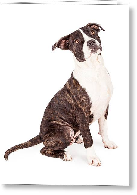 Mutts Greeting Cards - Obedient Terrier Mixed Breed Dog Greeting Card by Susan  Schmitz