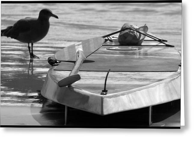 Seagul Greeting Cards - Ocean Adventures Greeting Card by Brad Scott