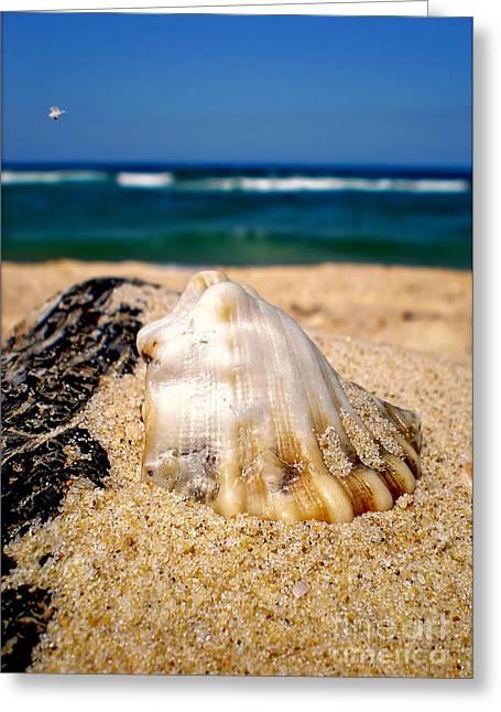 Kaye Menner Shells Greeting Cards - Ocean beyond a Shell Greeting Card by Kaye Menner