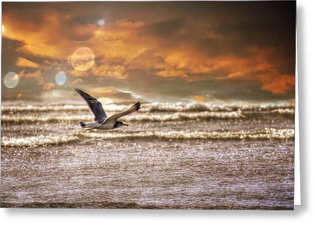 Flying Seagull Greeting Cards - Ocean Flight Greeting Card by Aaron Berg