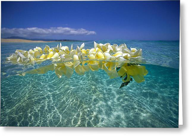 Lei Greeting Cards - Ocean Surface Greeting Card by Vince Cavataio - Printscapes
