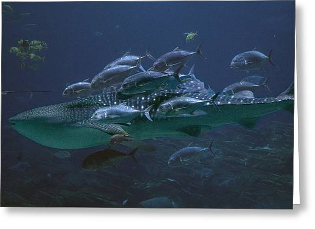 Whale Photographs Greeting Cards - Ocean Treasures Greeting Card by Betsy C  Knapp