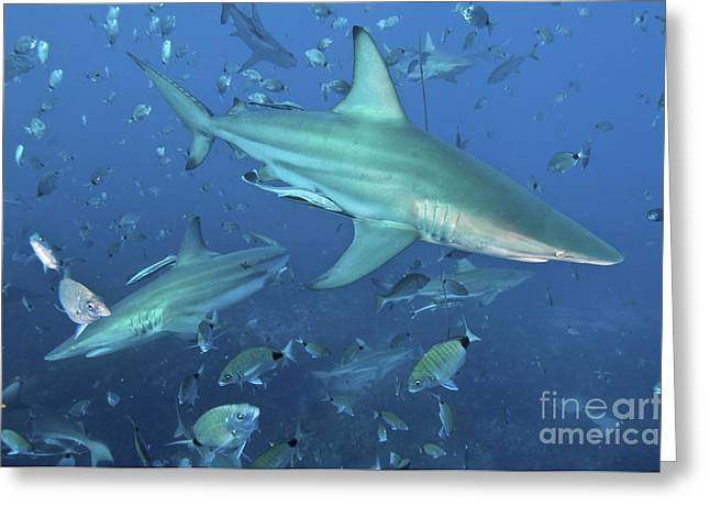 Fish In Ocean Greeting Cards - Oceanic Blacktip Sharks In A Cloud Greeting Card by Mathieu Meur