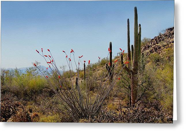 Cave Creek Cowboy Greeting Cards - Ocotillo in Bloom Greeting Card by Gordon Beck