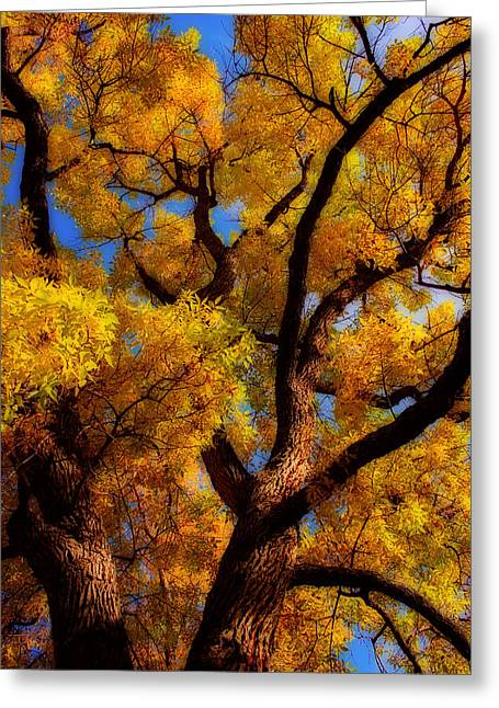 Striking Images Greeting Cards - October  Day Dream Greeting Card by James BO  Insogna