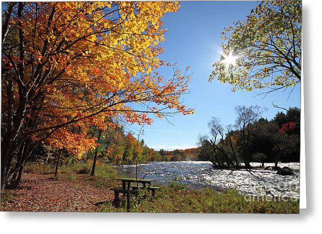Fall River Scenes Greeting Cards - October light Greeting Card by Mircea Costina Photography