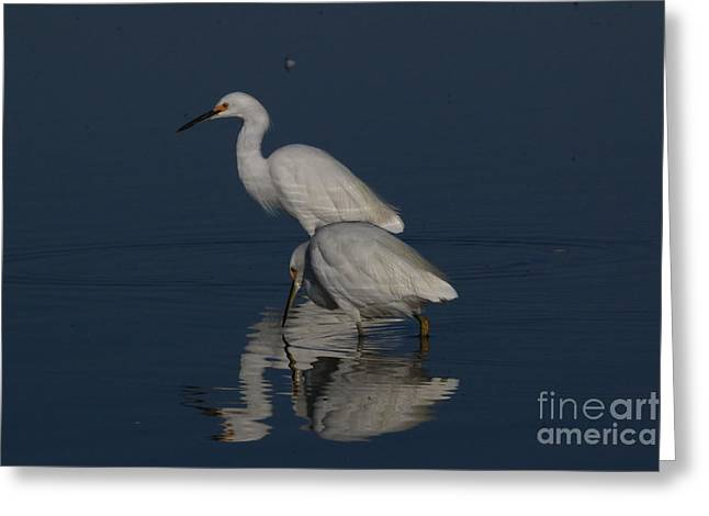 Hunting Bird Greeting Cards - October Snow In California Greeting Card by Craig Corwin