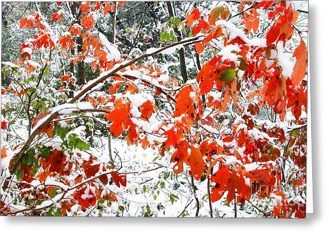 Allegheny Greeting Cards - October Snow  Greeting Card by Thomas R Fletcher