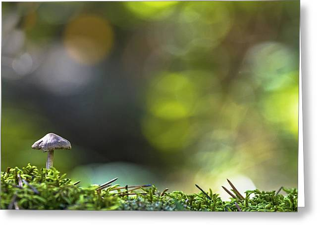 Moss Green Greeting Cards - Ode To A Mushroom Greeting Card by Mary Amerman