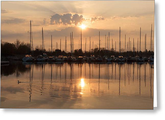 Water Vessels Greeting Cards - Of Yachts and Cormorants - A Golden Marina Morning Greeting Card by Georgia Mizuleva
