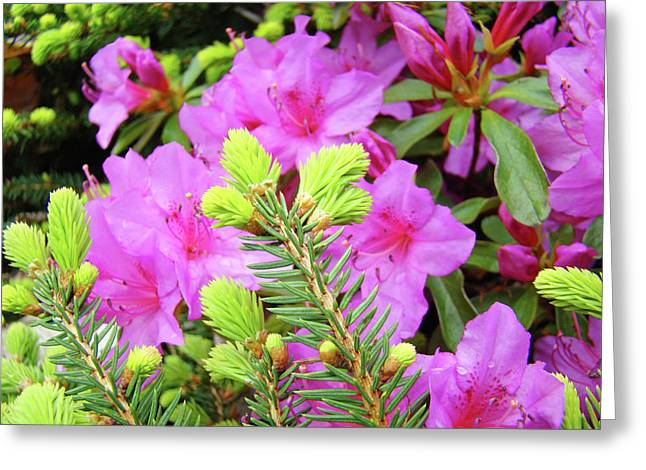 Conifer Tree Greeting Cards - OFFICE ART Pine Conifer Pink Azalea Flowers 38 Azaleas Giclee Art Prints Baslee Troutman Greeting Card by Baslee Troutman
